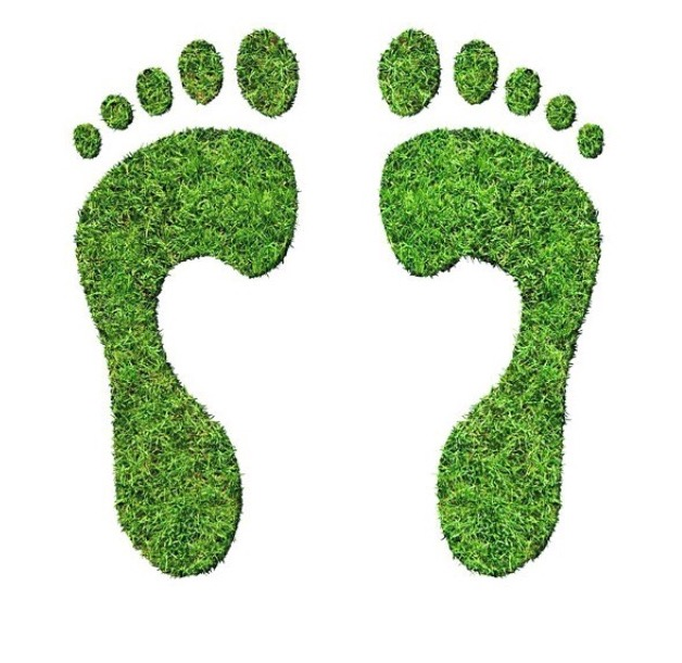 little green steps, green feet and sustainability for green organic beauty